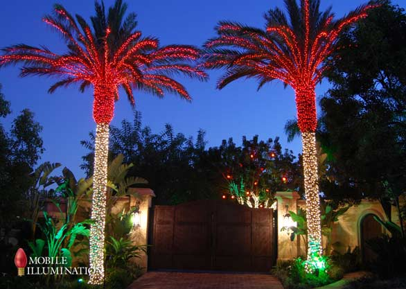 Christmas Lights In Palm Trees.Tree Wrapping And Tree Lighting Mobile Illumination