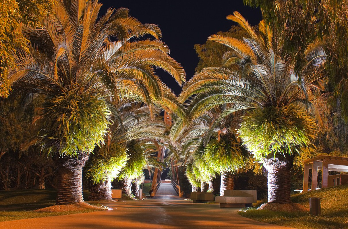 Landscape Lighting Installation - Palm Tress