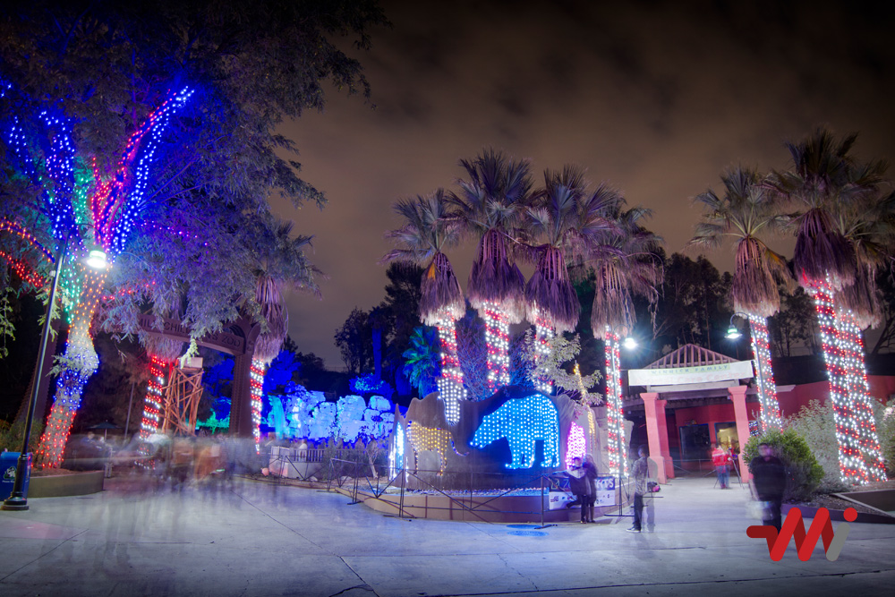 Christmas Lighting Installation - LA Zoo