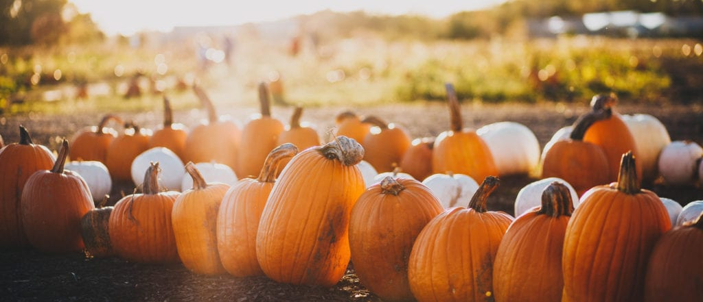 Fun Fall Activities in Los Angeles