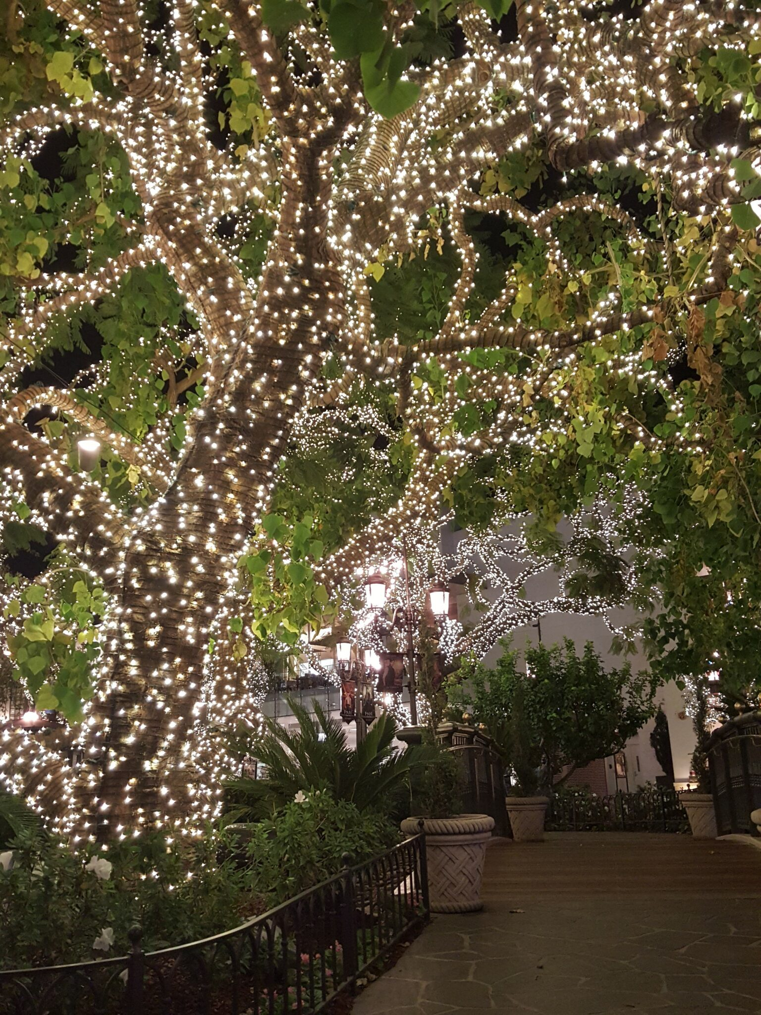 Grove Tree Lights