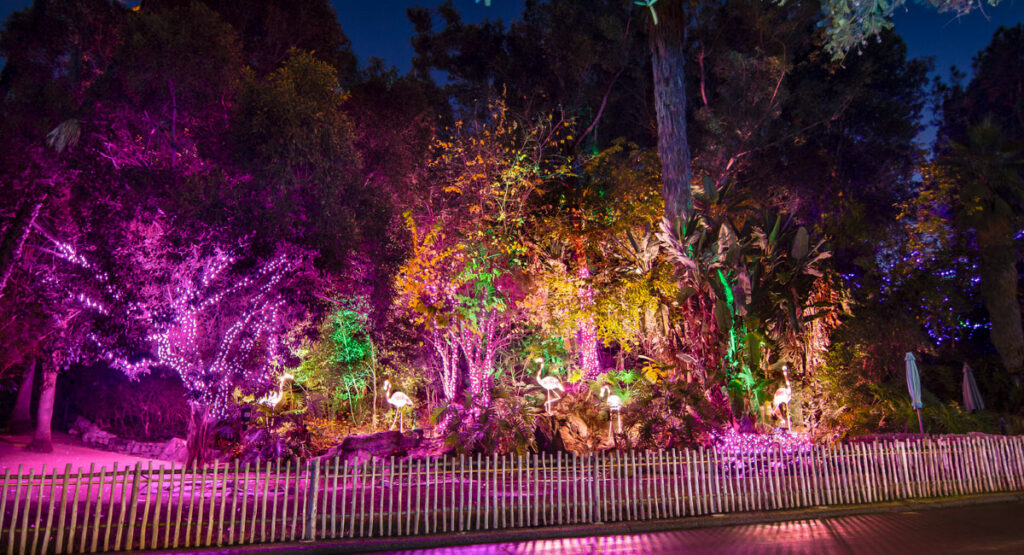 LA Zoo Lights Flamingo Party