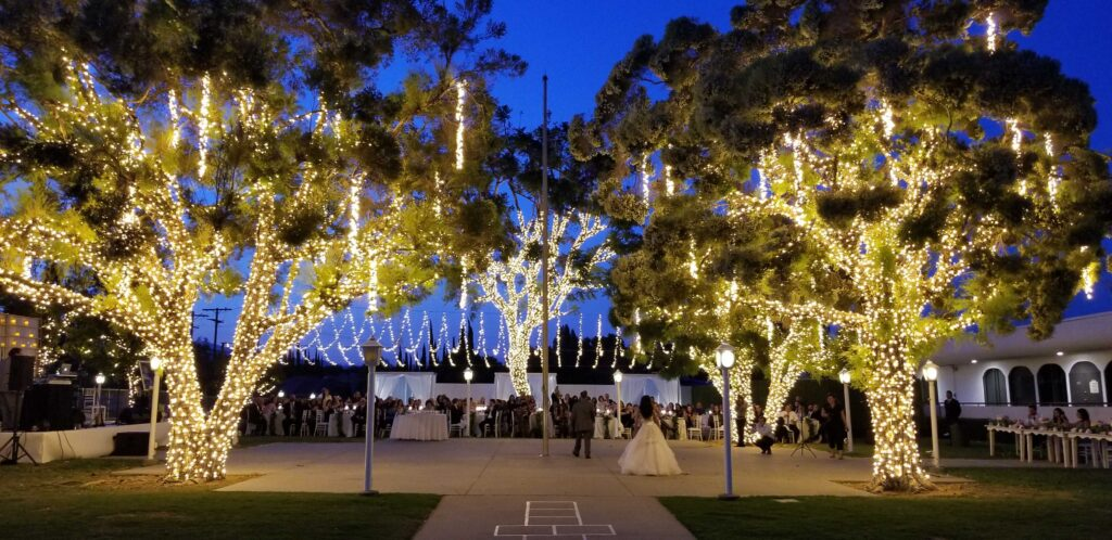Twinkle Lights On Trees